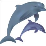 Schmuck mit Delphinmotiven